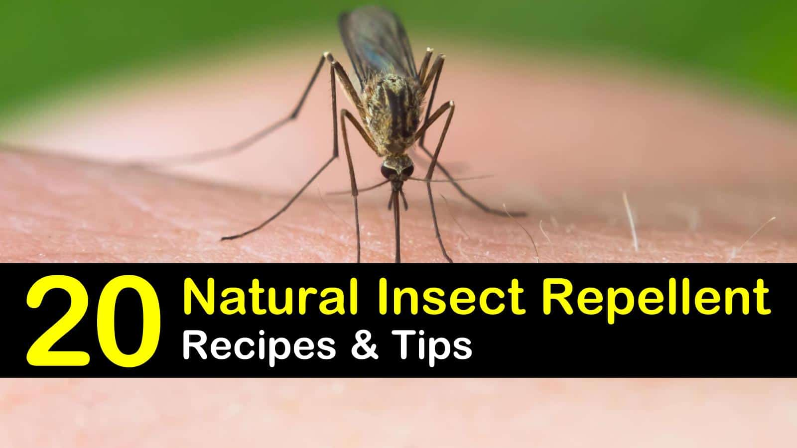 natural insect repellent titleimg1