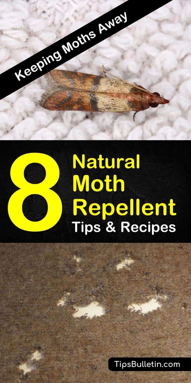 For all you anti-moth people out there come to learn how to get rid of them with all natural moth repellent using essential oils. Learn how to make your own lavender sachets for drawers and closets. #mothrepellent #cedarwood #lavender