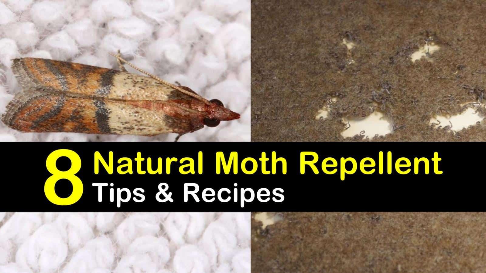 natural moth repellent titleimg1