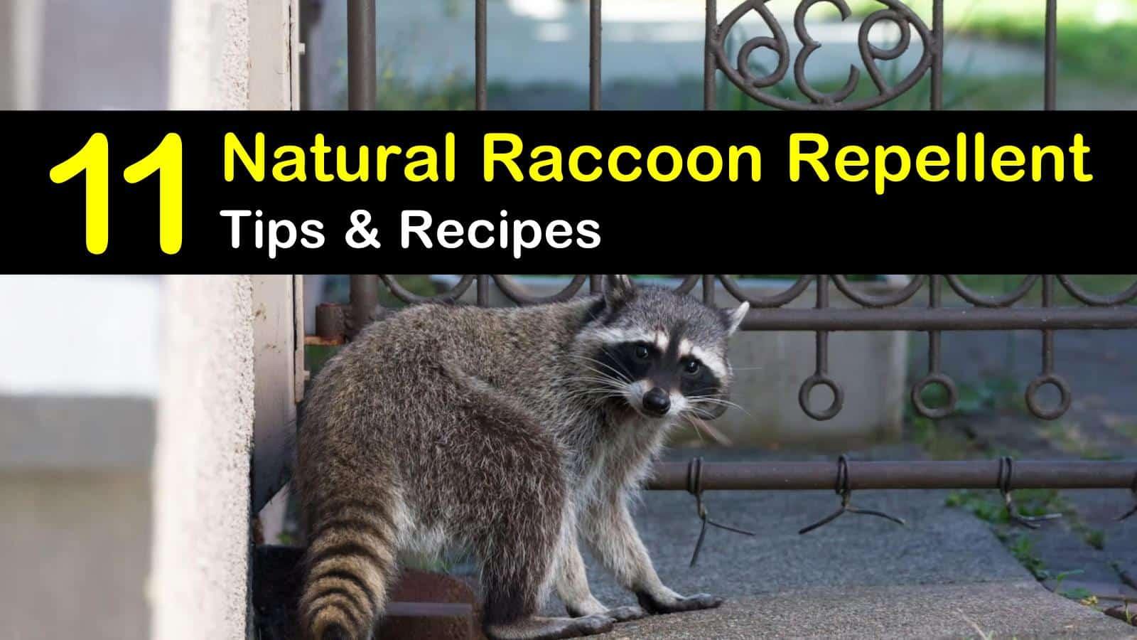 natural raccoon repellent titleimg1