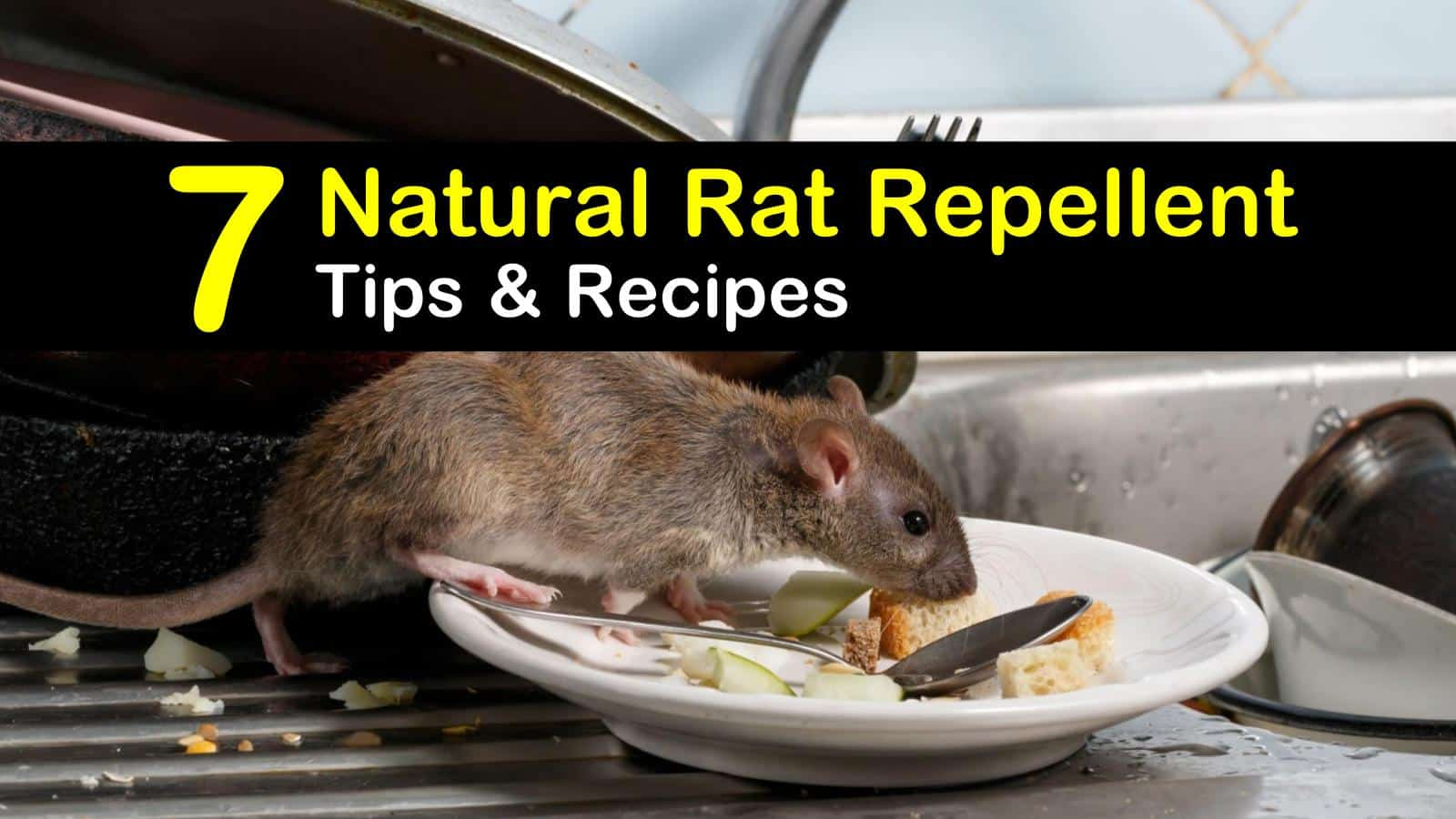 Natural Rat Repellent