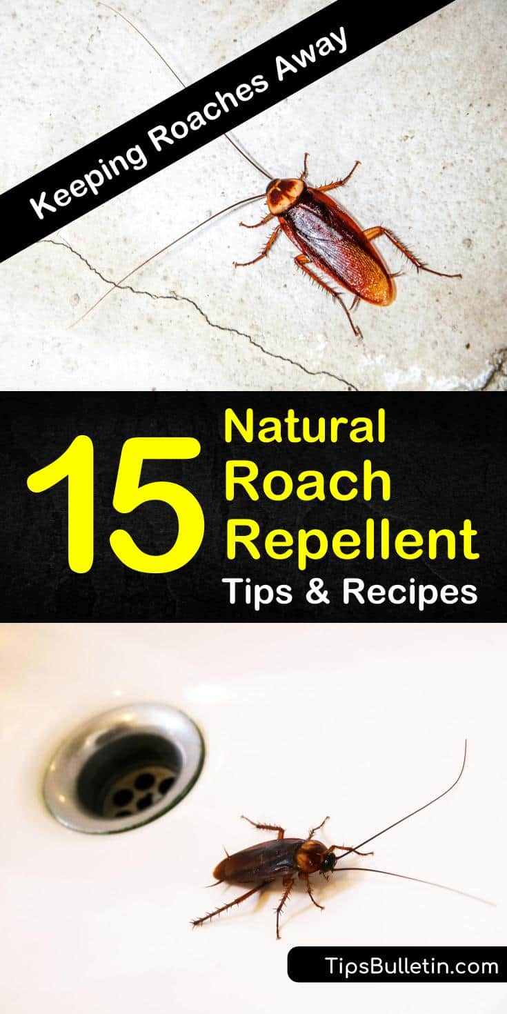 Cockroaches carry all sorts of diseases, the last thing you want is to have them in your home. Learn how to make natural roach repellent with items you have around the home, including bay leaves, baking soda, and essential oils. #pestcontrol #repellent #natural #roaches