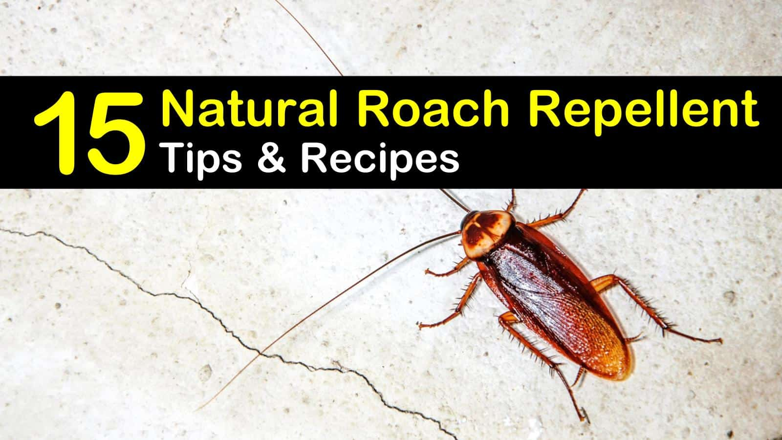 natural roach repellent titleimg1