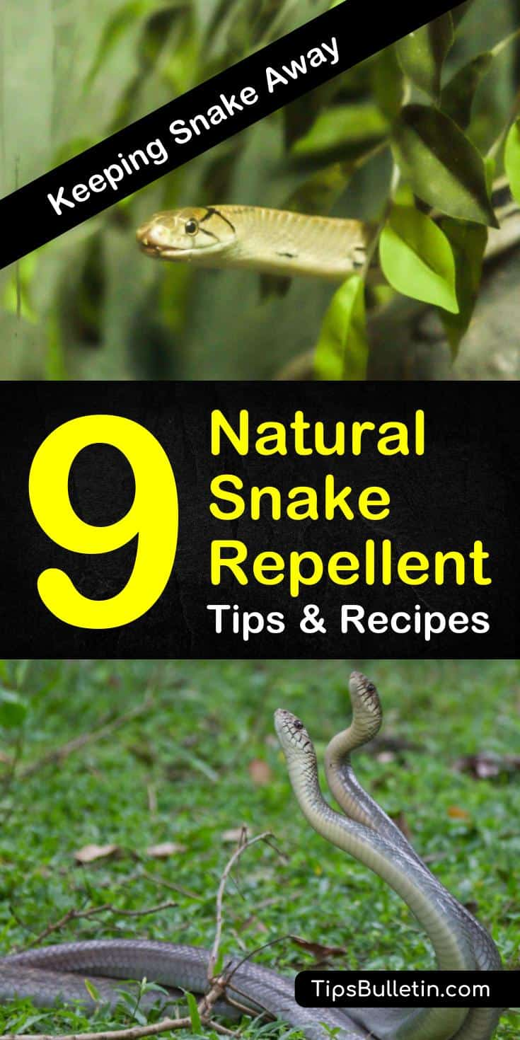 Try these various tips and recipes to keep those slithering snakes out of your yards and away from your pets. With these various natural snake repellent remedies, you will have a snake-free home in no time. #getridofsnakes #pestcontrol #snakes