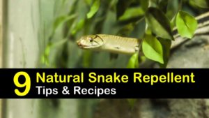 natural snake repellent titleimg1