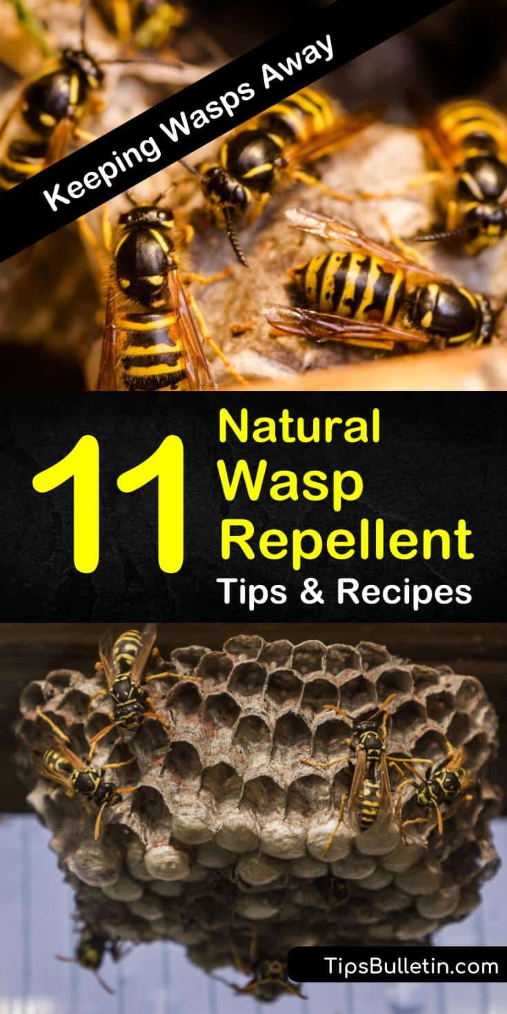 Learn how to make a DIY natural wasp repellent spray at home using products like essential oils and vinegar. These pest control tips will teach you how to get rid of yellow jackets and insects invading your house and yards. #homemade #wasprepellent #yellowjacket