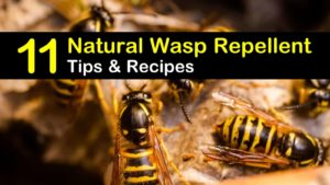 natural wasp repellent titleimg1