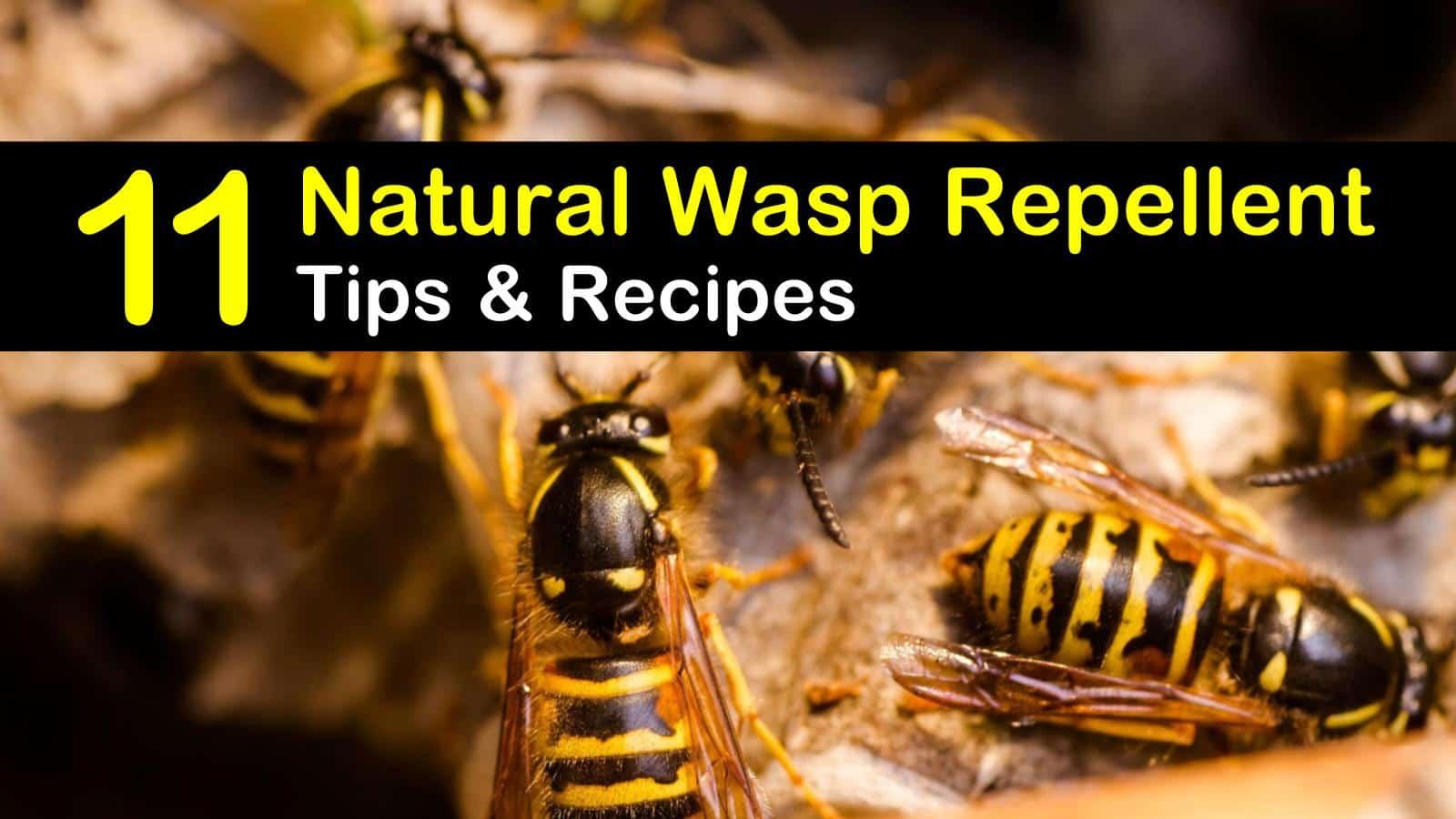 natural wasp repellent titleimg1