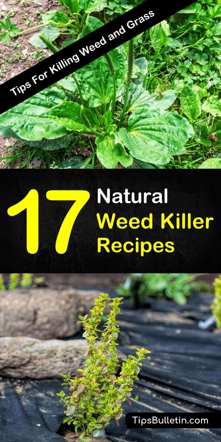 Discover 17 natural weed killers for flower beds, walkways, and driveways. These recipes are safe for dogs and pets and are the perfect way for lawns to look their best. #weedkillerrecipe #weedrepellent #weedkiller