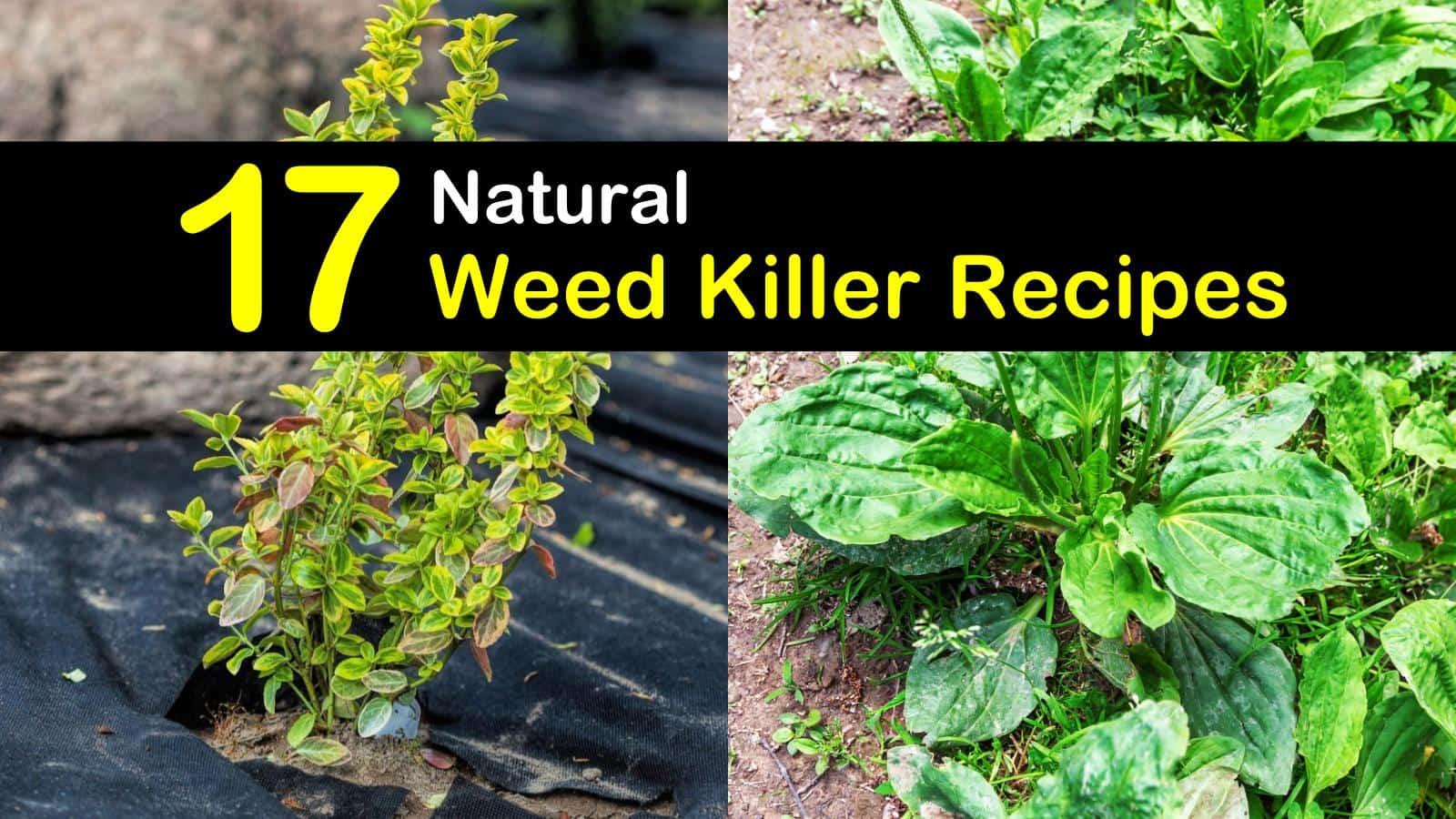 natural weed killer titleimg1