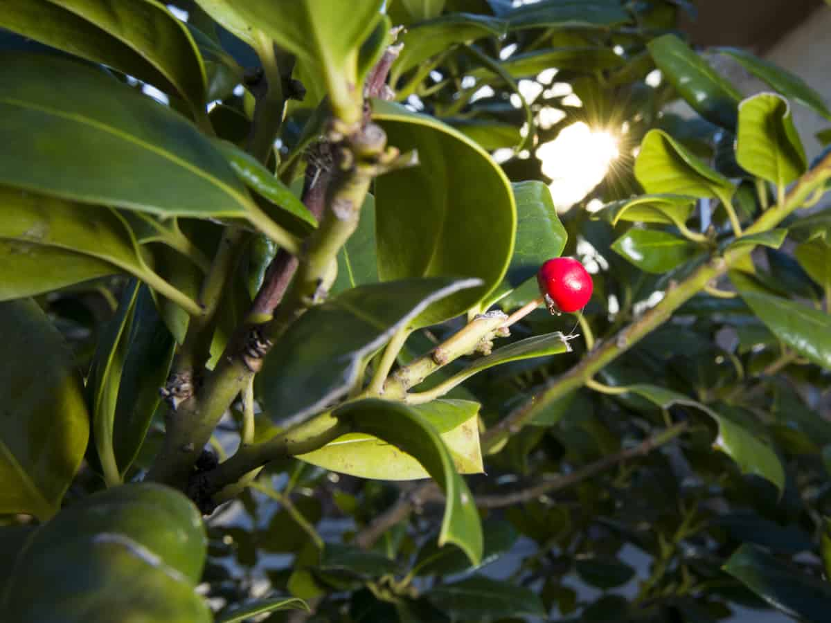 Nellie Stevens holly hides ugliness nearby