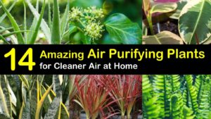 air purifying plants titleimg1
