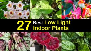 best low light indoor plants titleimg1
