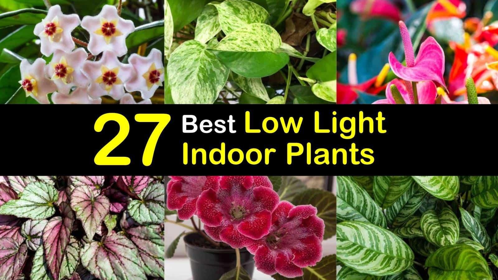 27 Best Low Light Indoor Plants For Light Starved Rooms