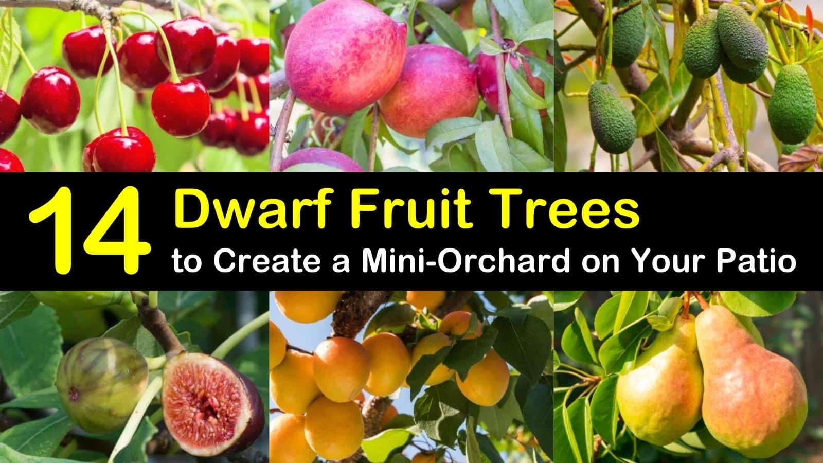 dwarf fruit trees titleimg1