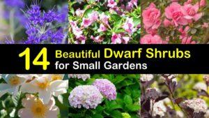 dwarf shrubs titleimg1