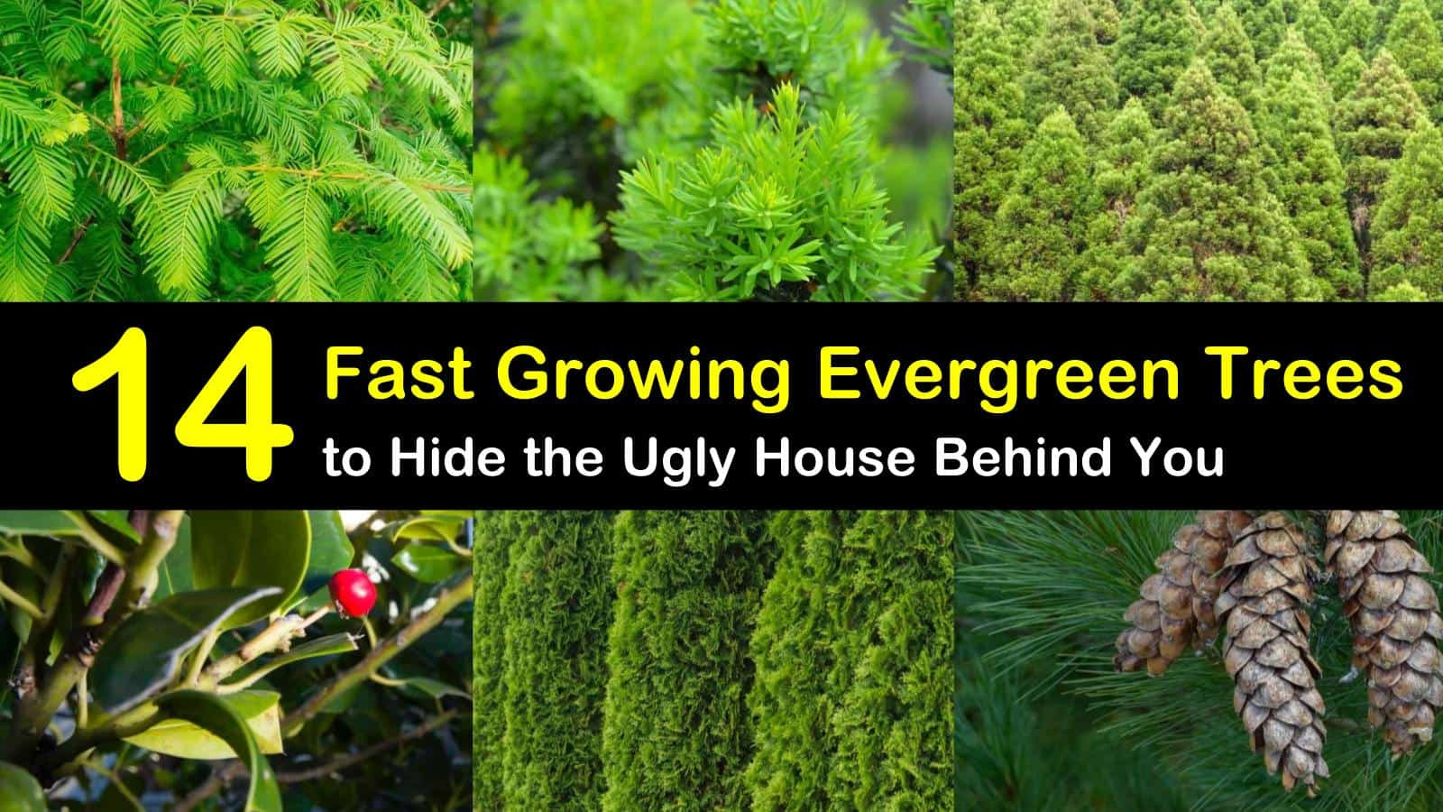 14 Fast Growing Evergreen Trees To Hide The Ugly House Behind You