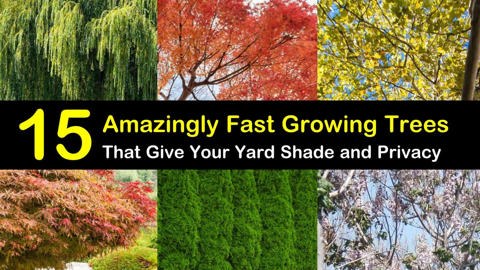 15 Amazingly Fast Growing Trees That Give Your Yard Shade And Privacy