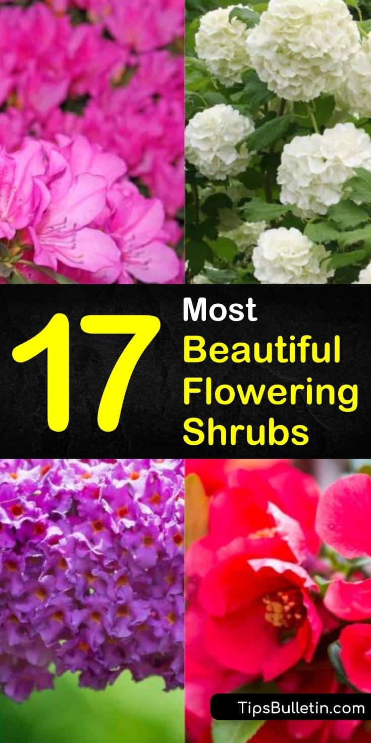 Discover the beauty of flowering shrubs! With these bright and fun blooming bushes, you'll be able to add a pop of color in front of your house. Whether you need full sun or plants for shade, these gorgeous flowering shrubs will do the trick. #blooming #bushes #shrubs #landscaping