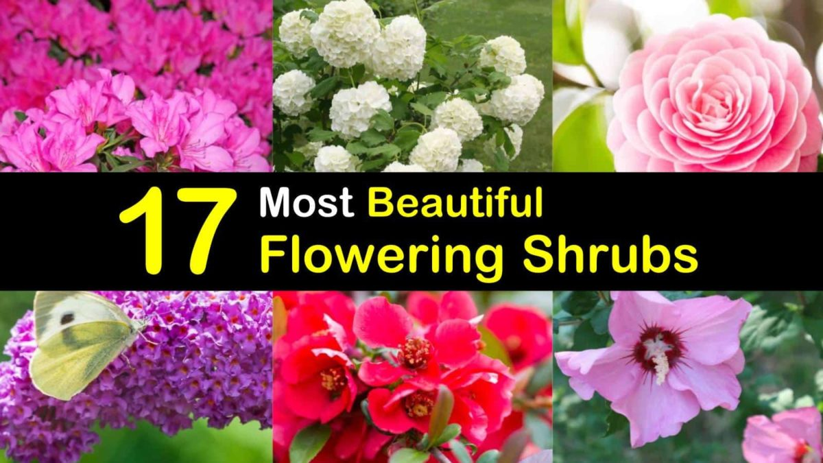 17 Most Beautiful Flowering Shrubs Amazing Bushes For A Colorful