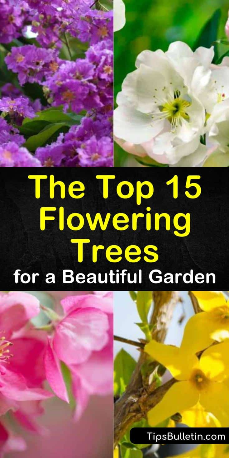 Learn how to grow flowering trees for front yard or for decks and patios. Know which variety of trees are fast growing and which types can fit in small spaces. Here are 15 trees that can survive in the midwest, southern, northeast, or any region you belong to