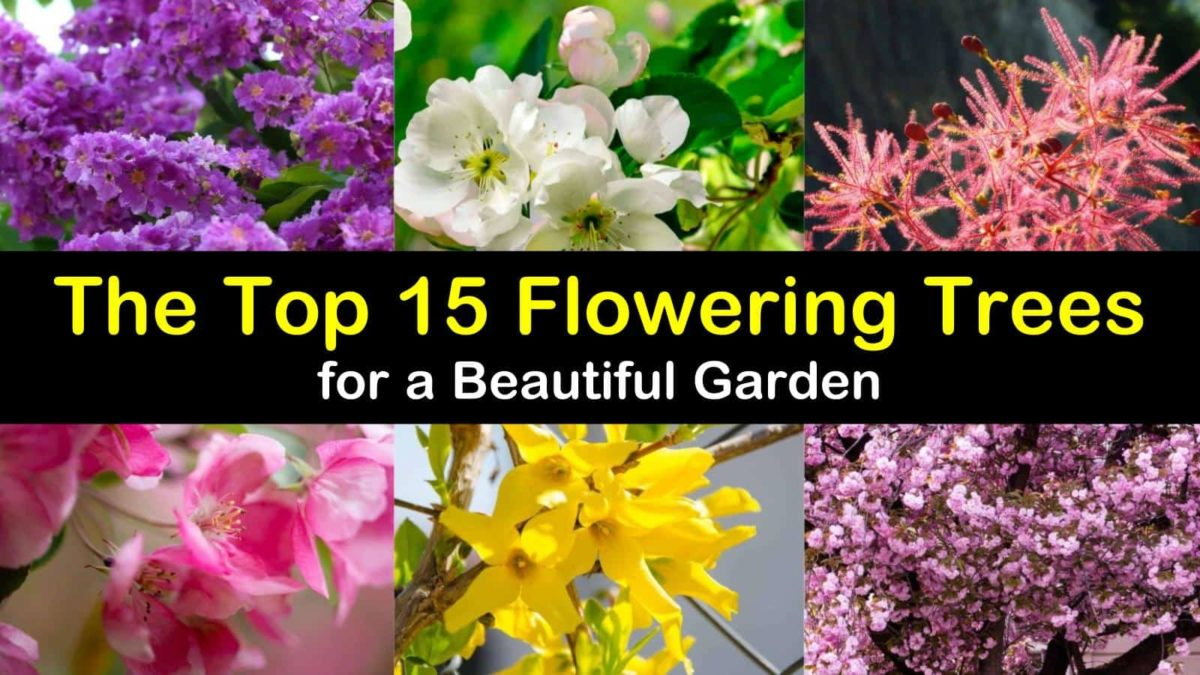 The Top 15 Flowering Trees For A Beautiful Garden