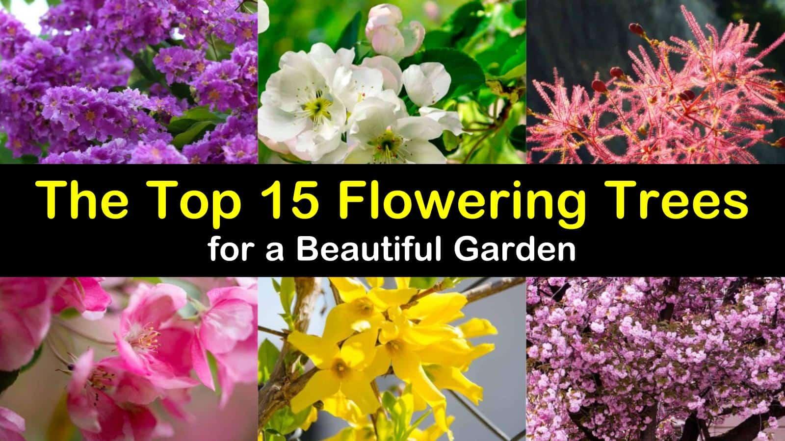flowering trees titleimg1