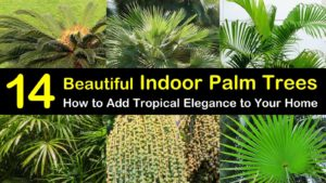 indoor palm trees titleimg1