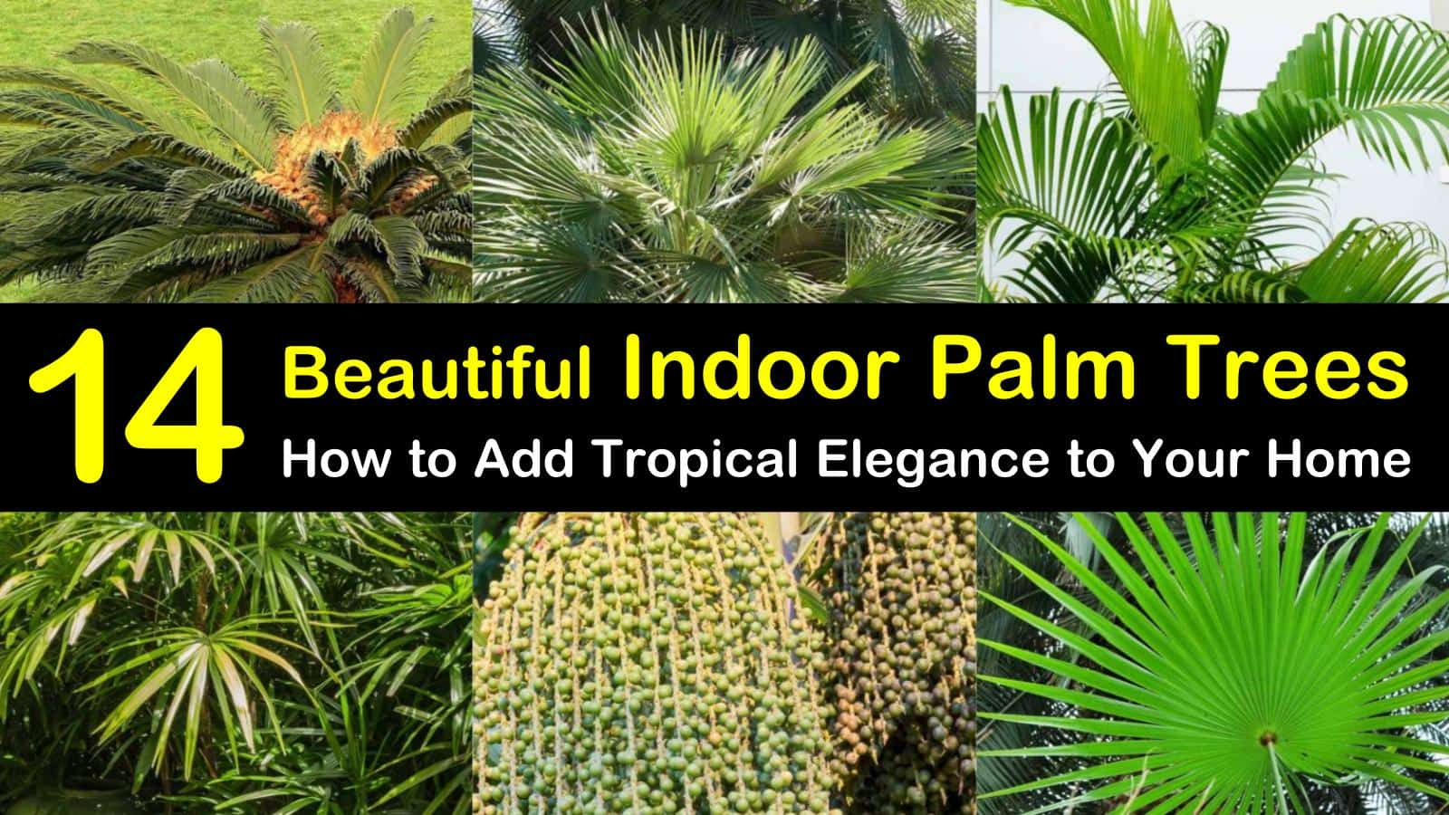 14 Beautiful Indoor Palm Trees: How to Add Tropical Elegance ... on