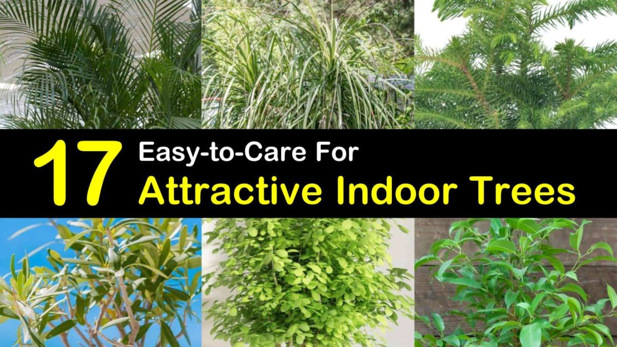 17 Attractive Indoor Trees That Won T Kill The Cat