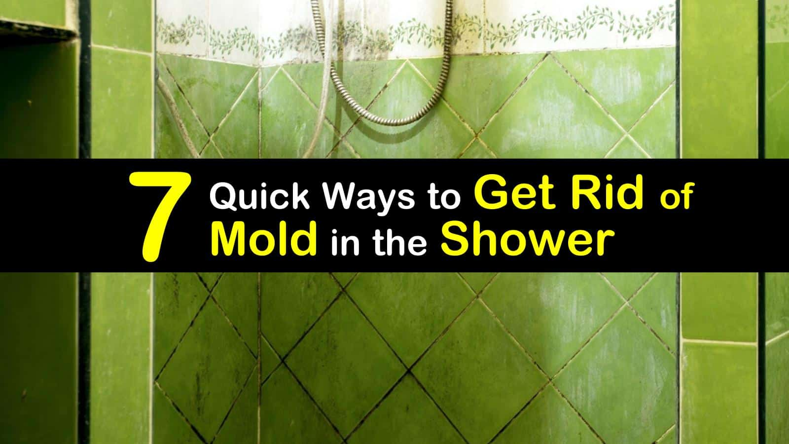 mold in the shower titleimg1