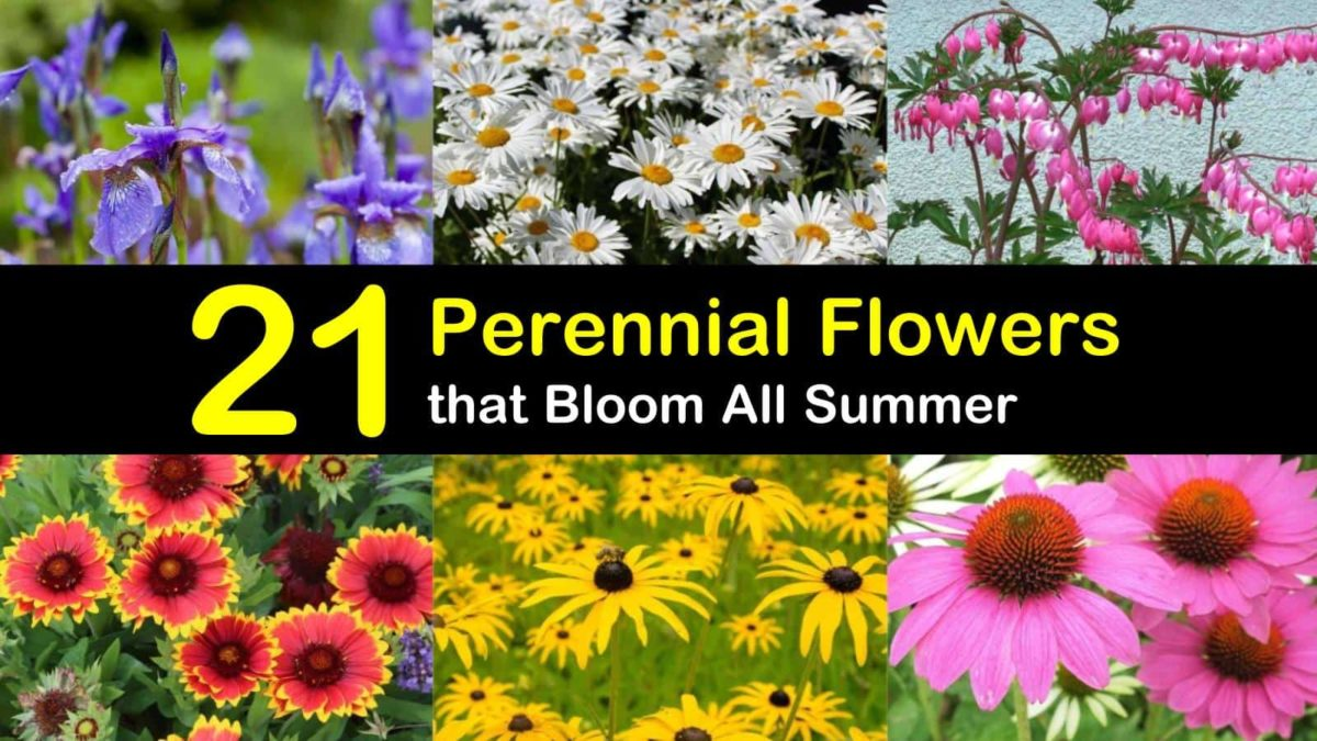 21 Perennial Flowers That Bloom All Summer Even From Spring To Fall