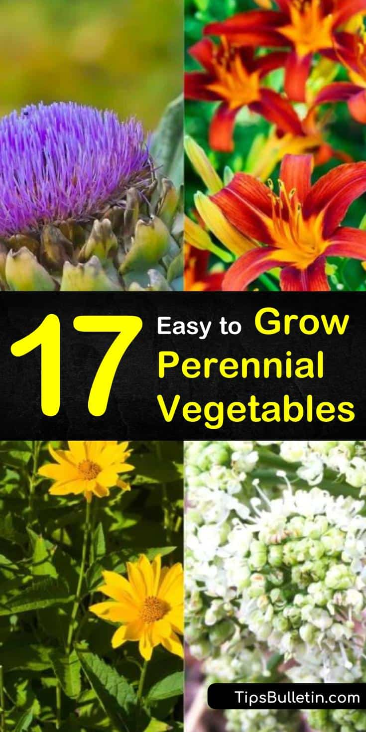 Discover how to grow perennial vegetables! In our guide, we show you how to take perennial gifts from Mother Earth and grow them in raised beds in your garden. Learn how to turn seeds into asparagus and artichoke flowers with our handy guide! #perennials #perennialveggies #vegetables