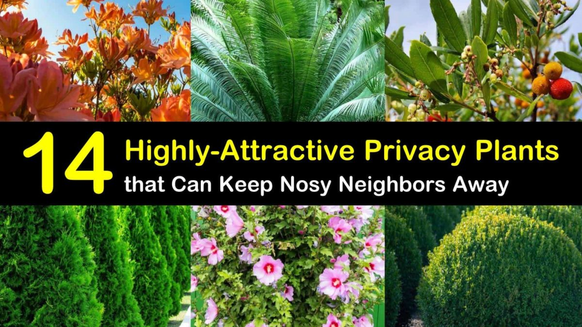 14 Highly Attractive Privacy Plants That Can Keep The Nosy