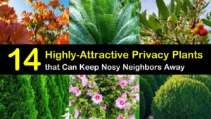privacy plants titleimg1
