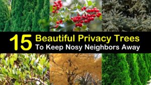 privacy trees titleimg1