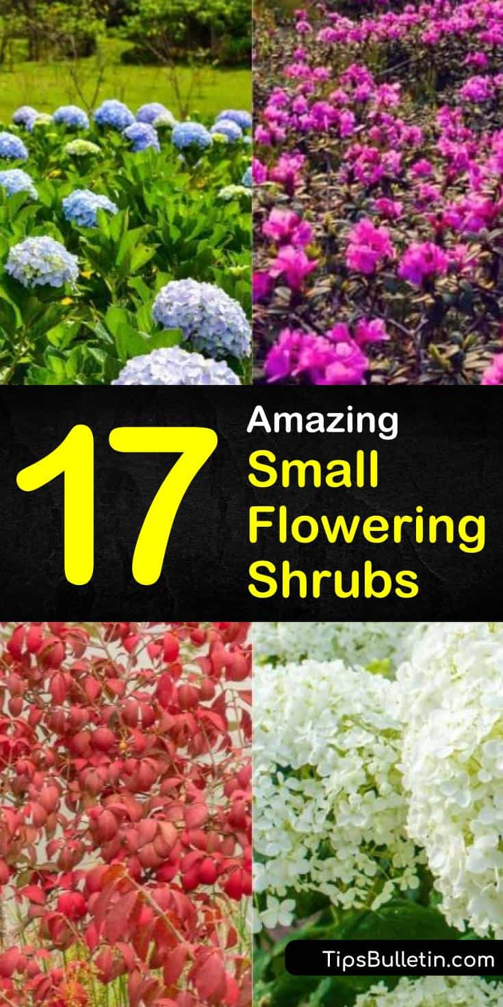 Find out which small flowering shrubs and hedges are right for front yards and backyards. In our guide, we give you tips on small shrubs that like full sun, do well near the house, and shade you every spring! #shrubs #flowers #dwarfshrubs #bushes