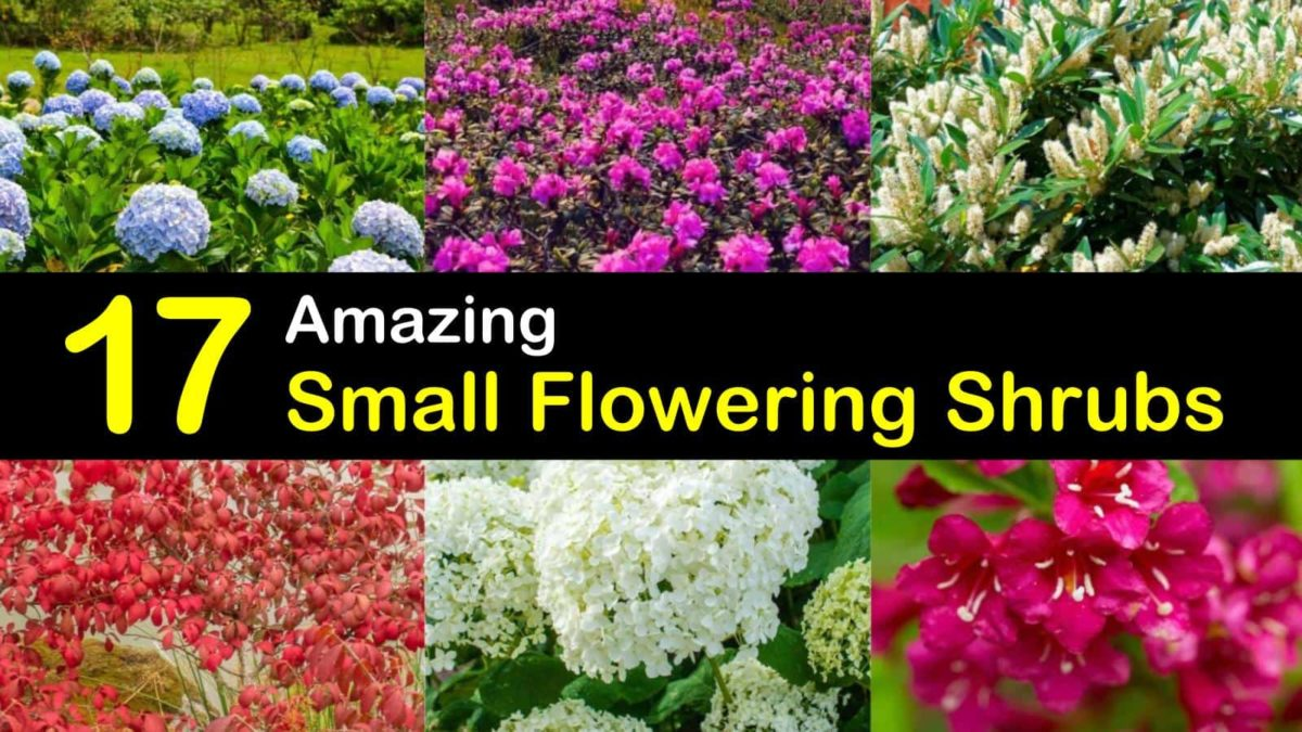 17 Amazing Small Flowering Shrubs