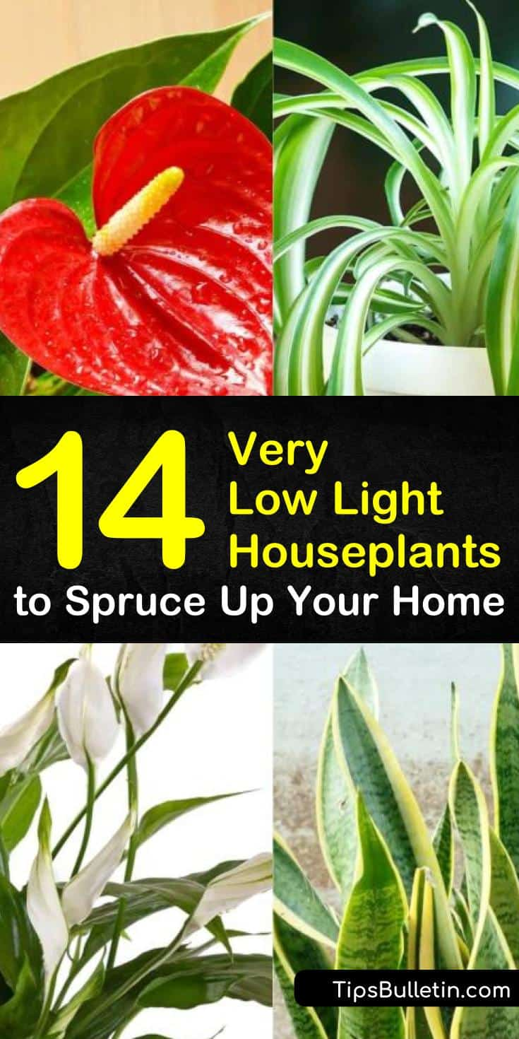 Learn about the different kinds of very low light houseplants you can keep in even the darkest corners of your home! Now you don't need a south facing window to have beautiful houseplants. #indoorplants #lowlightplants