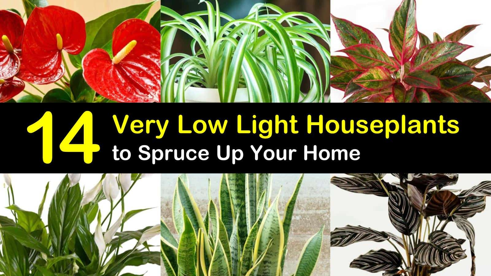 14 Very Low Light Houseplants to Spruce Up Your Home Zanzibar Gem Plant At Home on pomegranate plant, philodendron plant, fairy duster plant, indoor rubber tree plant, money tree plant, topiary plant, croton plant, pot plant, jade plant,