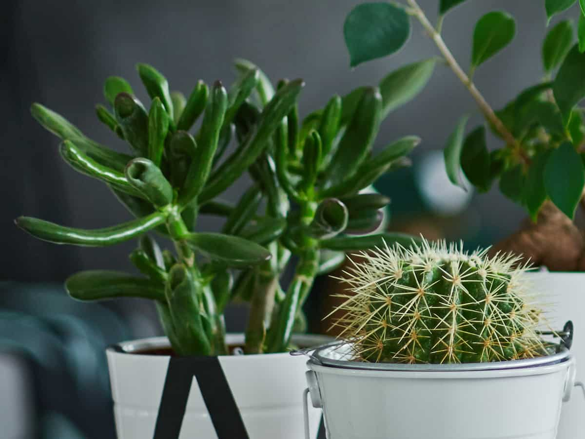 a cactus is the perfect easy-to-care-for office plant