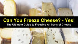 can you freeze cheese titleimg1