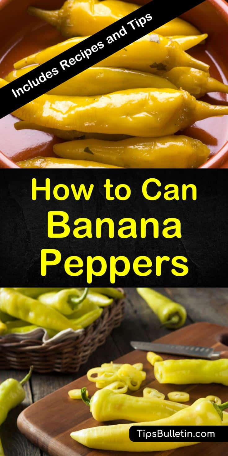 Make your banana peppers last the whole year long! Our guide will show you the best way for canning banana peppers in white vinegar so you can use them in recipes and sandwiches whenever you want! #canning #peppers #bananapeppers