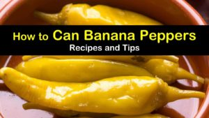 canning banana peppers titleimg1