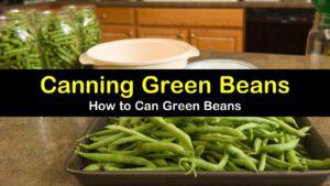 canning green beans titleimg1