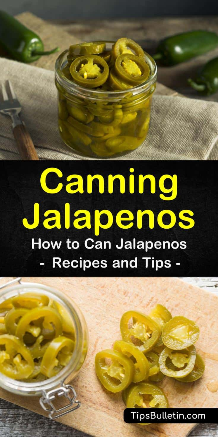 Discover that canning jalapenos in a water bath or pressure canner is easy! Our guide shows you how to preserve whole peppers for cowboy candy, cream cheeses, and pepper jelly. Your family will thank you! #jalapenos #canning #peppers