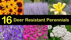 deer resistant perennials titleimg1