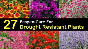 drought resistant plants titleimg1