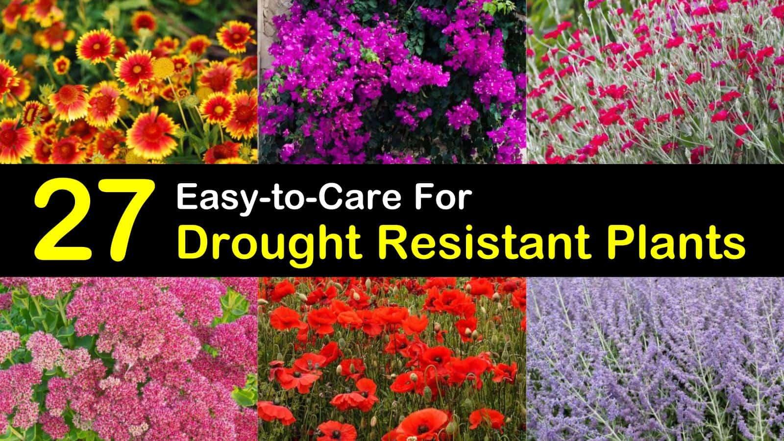 drought resistant plants titleimg1