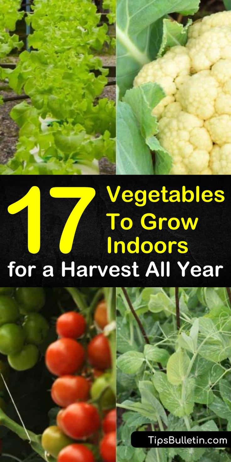 Learn how growing vegetables indoors year round is easy and fun. Even apartments with limited space have enough room for a few pots of vegetables for some much needed organic gardening. #indoor #vegetables #growvegetables